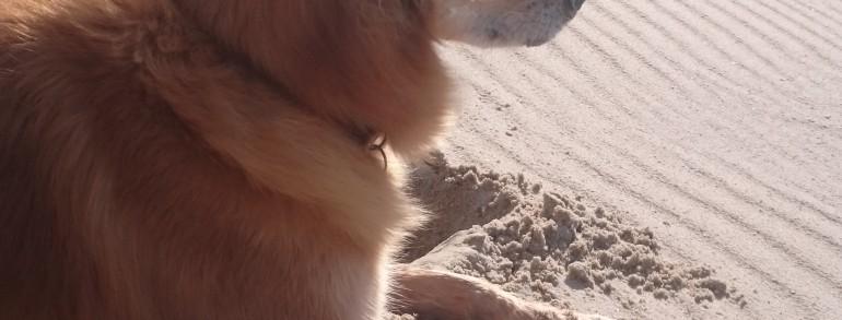 Reiten am Strand…