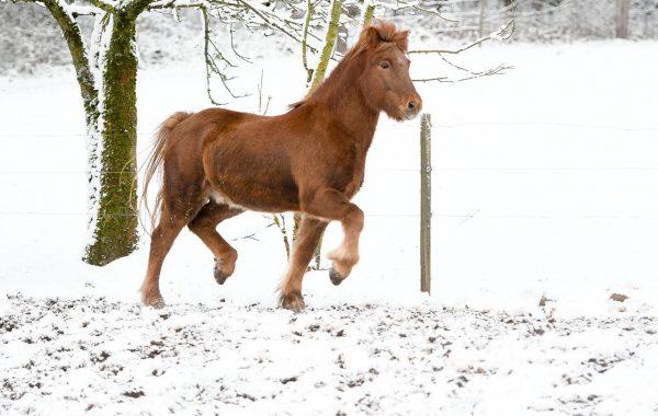 November mit Schnee statt Regen-ein paar schöne Fotos von Timo hat es gegeben
