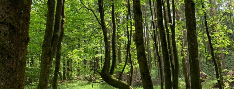 Ritt ins Ayurvedazentrum Westerwald